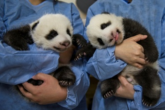Mbappe will act as goodfather of two panda cubs. AFP